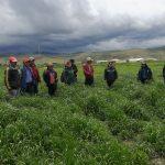 Junín: Instalarán pastos cultivados en 56 distritos