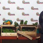 Huánuco: Investigan a conductor que trasladaba aves protegidas a Lima