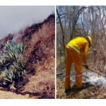 Extinguen siete incendios forestales en Cusco, Áncash y Amazonas