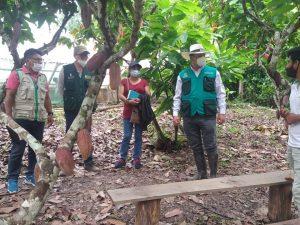 San Martín: Diseñan ruta agroturística del cacao en Chazuta
