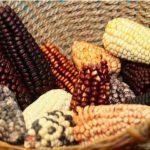 Perú fortalece acceso a recursos genéticos para protegerlos de biopiratería