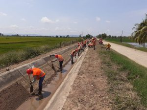 San Martín: Limpian 310 km de canales en el Huallaga Central