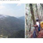 Extinguen incendios forestales en Apurimac y Puno