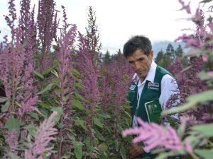 Minagri mejora rentabilidad de 8 mil agricultores de Cajamarca