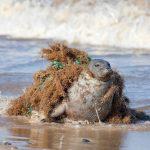 Las redes fantasmas son la amenaza más letal de los desechos plásticos en el mar