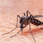 Más de un millón de viviendas serán protegidas contra el dengue