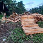 Nación Wampís establece medidas para frenar la tala ilegal