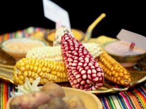 Nutricionistas instan a proteger biodiversidad alimentaria y agricultura familiar