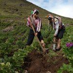 Exhortan al Gobierno promulgar 12 leyes aprobadas en el Pleno Agrario