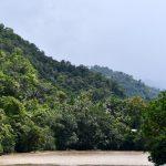 Huánuco: Empresas se suman a la protección bosques amazónicos