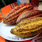 Pasco: Lanzan marcas de chocolate de la Reserva Comunal Yanesha
