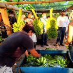 Huánuco: Devida invierte S/3.1 millones en Castillo Grande para mejorar acuicultura y producción bananera