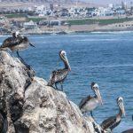 Serfor reconoce primer ecosistema frágil de punta rocosa en el Perú