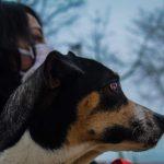 Las mascotas son nuestras aliadas para elevar la autoestima