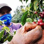 Socializan criterios en beneficio de la cadena de valor del café en San Martín