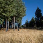 Minagri aprobó Plan Nacional de Investigación Forestal y de Fauna Silvestre