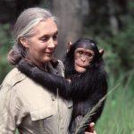 Primatóloga Jane Goodall galardonada por su defensa ambiental