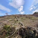 Amazonas: Investigan tala de árboles en el distrito de Jamalca