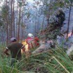 Incendios forestales fueron extinguidos en cuatro regiones