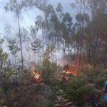 Extinguen ocho incendios forestales en cuatro regiones