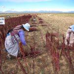 Valorización de la biodiversidad es clave para desarrollo de economías locales