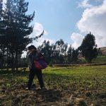 Apurímac: 4000 familias rurales mejorarán productividad ganadera