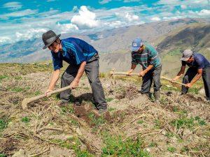 El Perú con una de las peores campañas agrícolas
