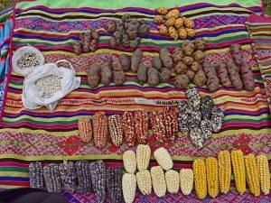 Cusco: Ccollasuyo es la tercera Zona de Agrobiodiversidad del Perú