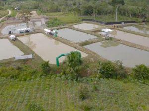 Alto Huallaga avanza en su desarrollo alternativo