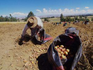 Solo el 1.7 % de financiación para el clima va a pequeños agricultores