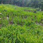 San Martín: Abordan presunto caso de tala ilegal