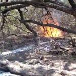 La Libertad: Bosque es afectado por incendio forestal