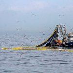 Exigen reforma global a la sobreexplotación de acervos y ecosistemas marinos
