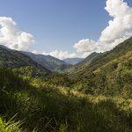 Impulsan sumar enfoque indígena en monitoreo de bosques del país