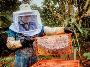 Impulsan producción de miel de abeja en el Alto Huallaga