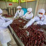 Amazonas: Productores beneficiados por cadenas productivas