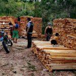 Inmovilizan 7000 pies tablares de madera en San Martín