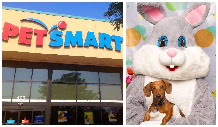 petsmart pictures with easter bunny 2020