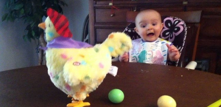 babys priceless reaction  easter hen laying eggs