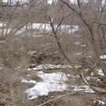 Racine 2007