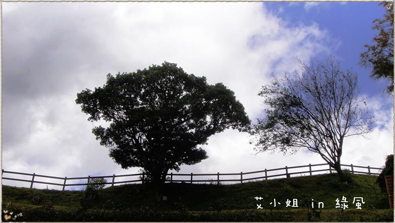 很有氣勢的樹