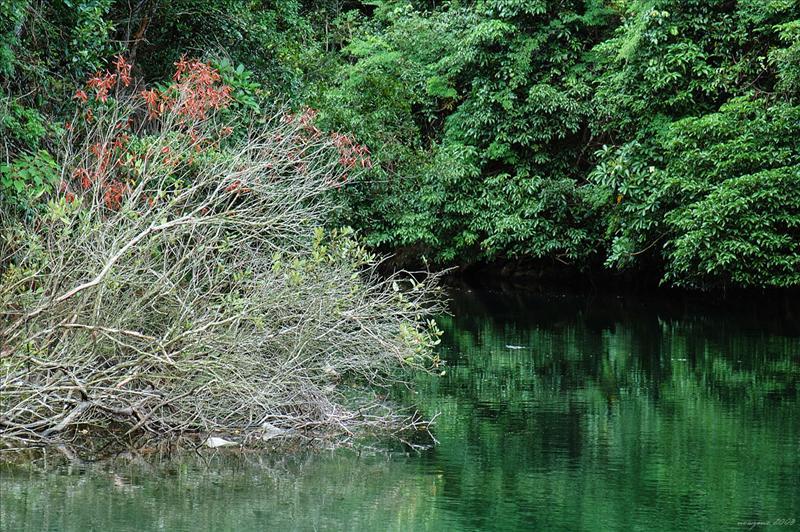 大潭中水塘壩底