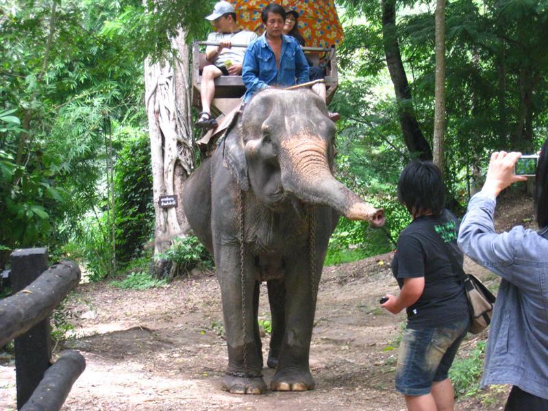 包子在和大象搭訕