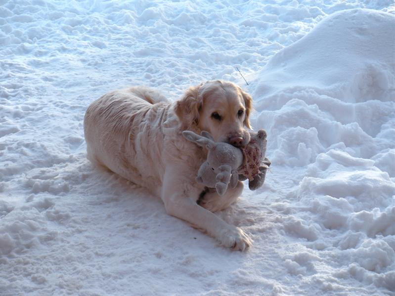 Molly with Reindeer