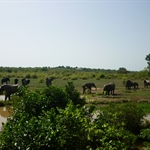 Mole Nationalpark - noch mehr Elephanten