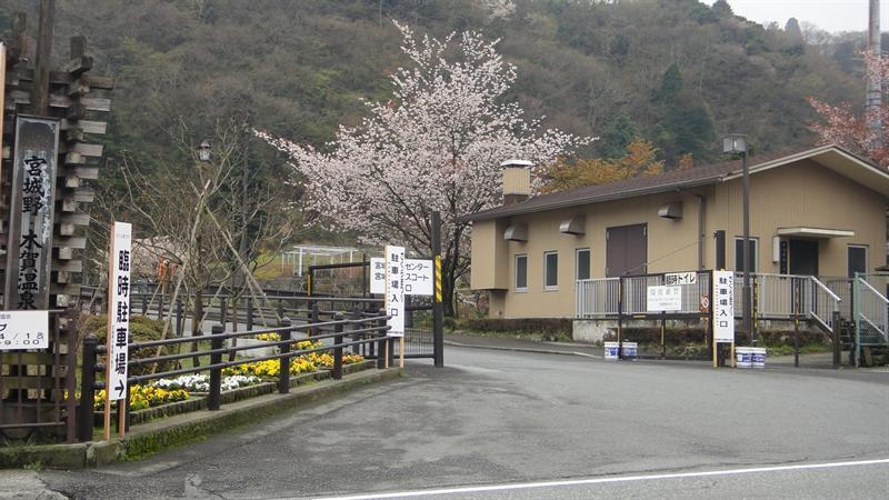 沿途可見櫻花