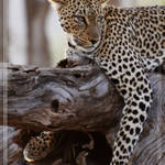 Wild Life in Kenya