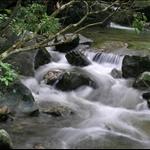 20050830 Tai Po Kau Nature Reserve 大埔滘自然護理區