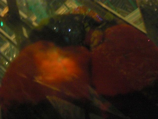 Lovebirds.  Their beaks are interlocked.