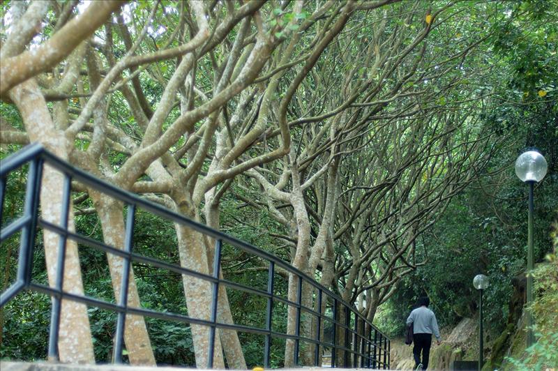 藍田公園 Lam Tin Park